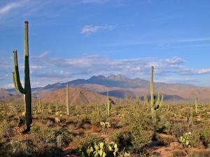 arizona_desert-1218